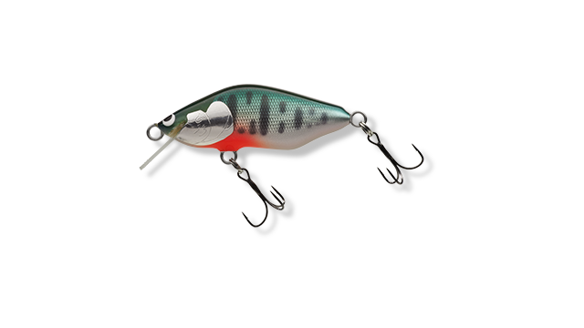 A-ST : サケ稚魚